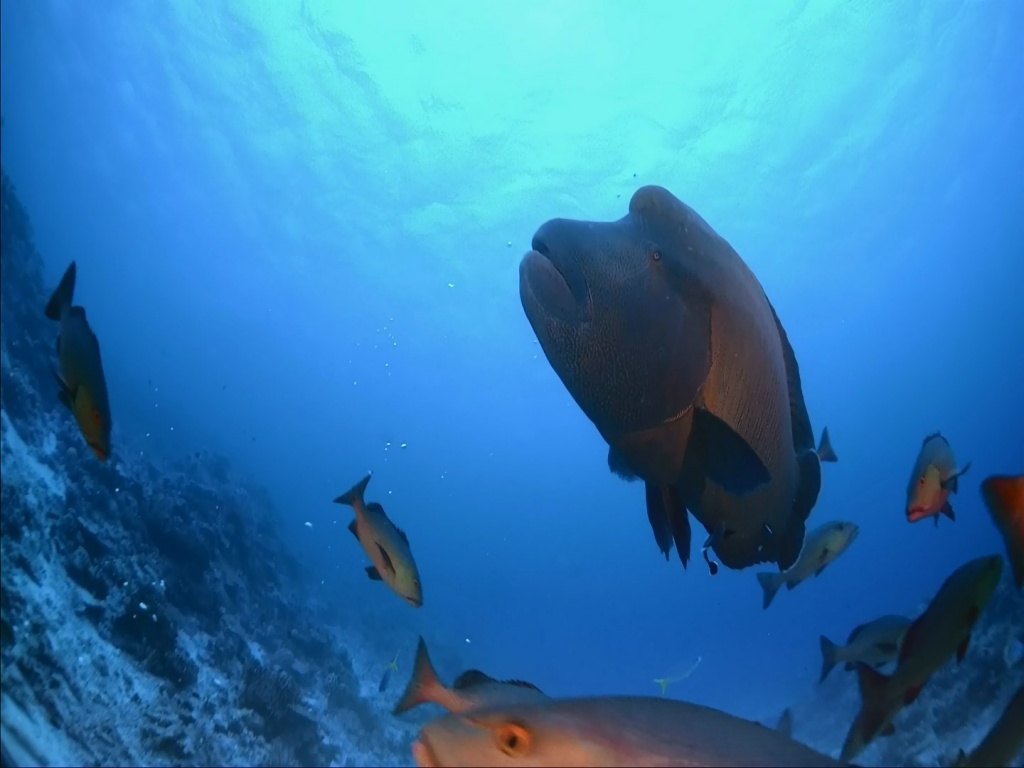IMAX Coralreef.Feature.WMV-HD.1080P.DTS.avi_snapshot_07.44_[2015.11.23_03.52.49].jpg